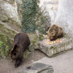 The bears that live in the mote around the castle